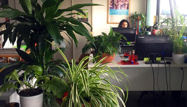 Lumaca Ufficio Verde 700Pxl