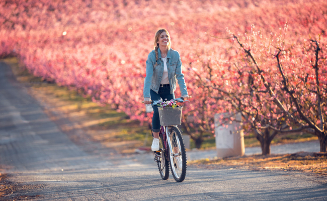 Biciguide viviverde 1000
